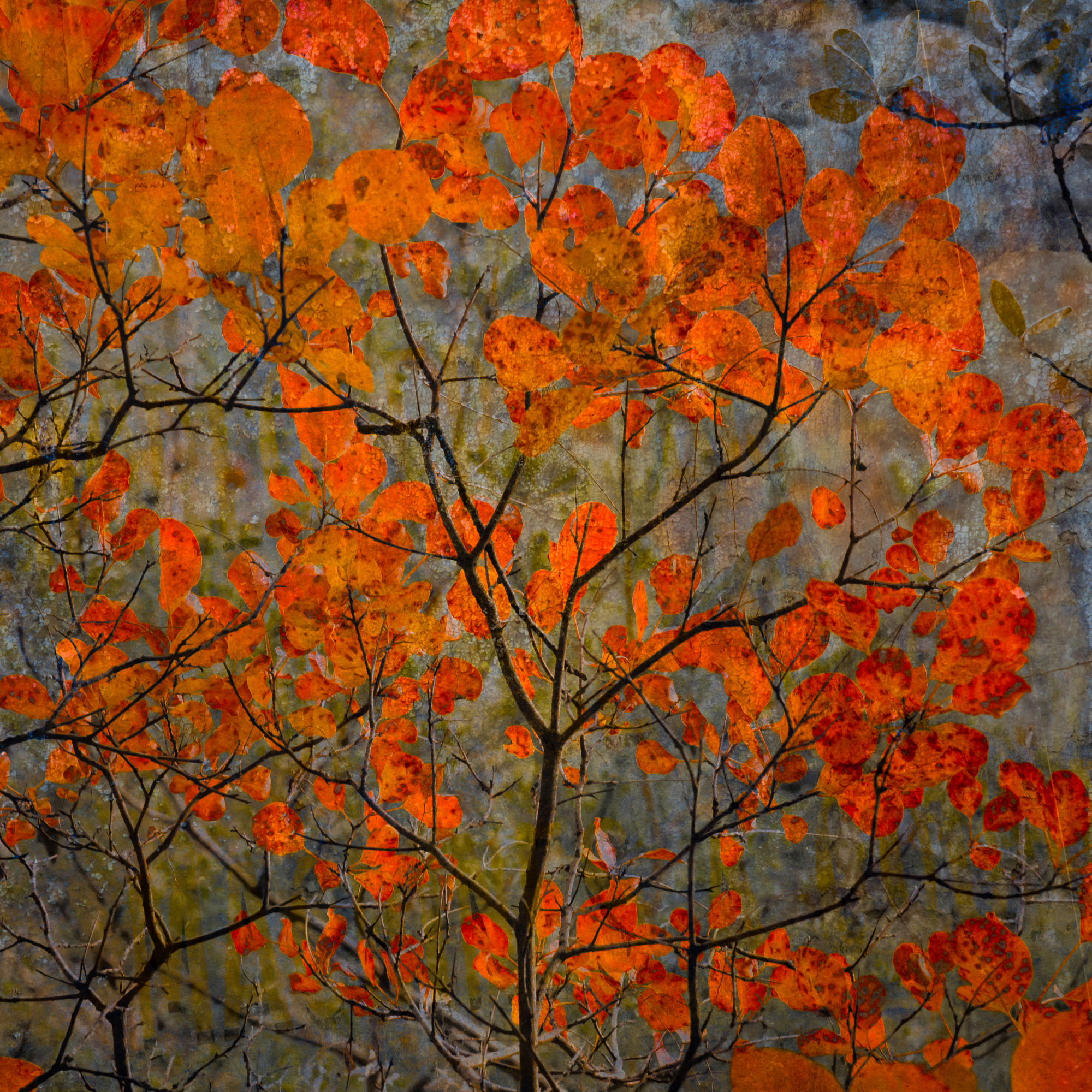 red maples tempered glass photo print