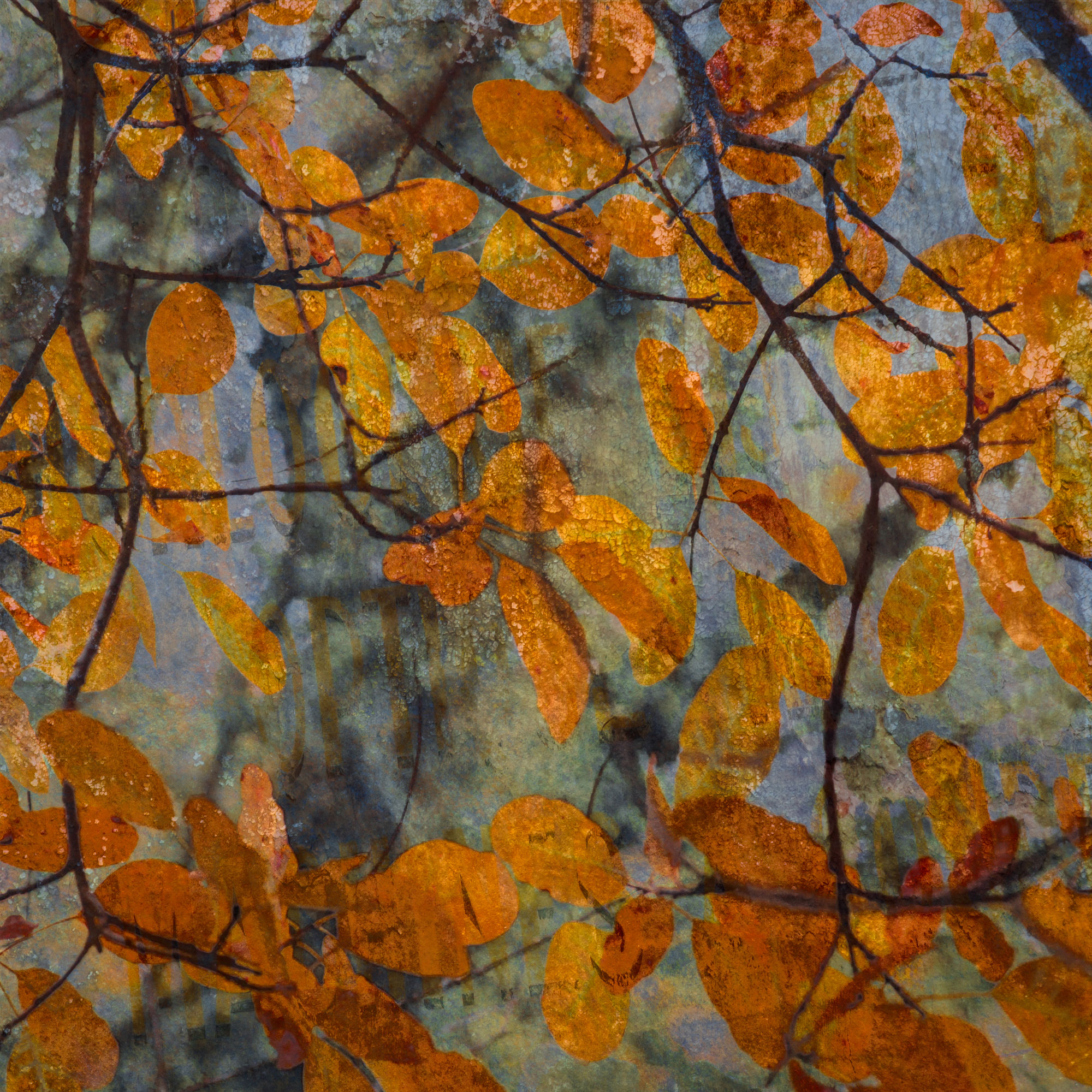 Orange Autumn Leaves tempered glass photo print